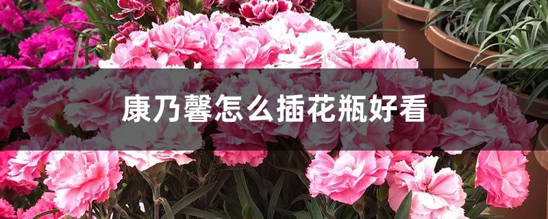 康乃馨怎么插花瓶好看