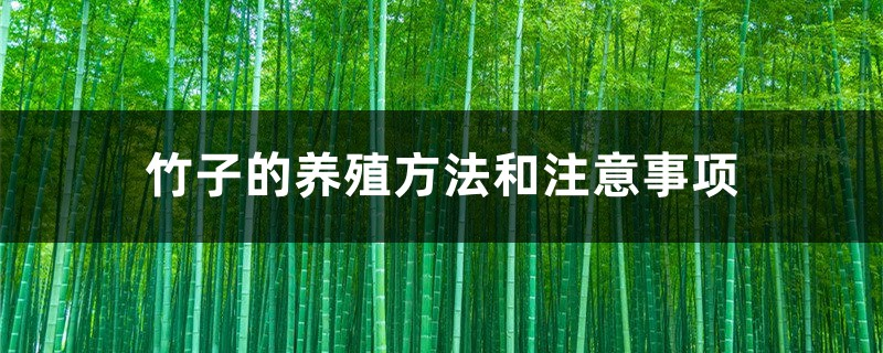 竹子的养殖方法和注意事项