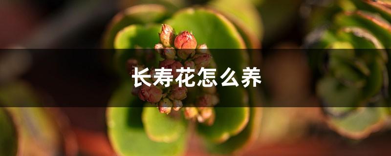 长寿花怎么养