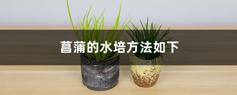 菖蒲的水培方法是什么