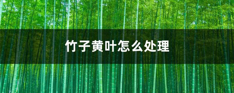 竹子黄叶怎么处理