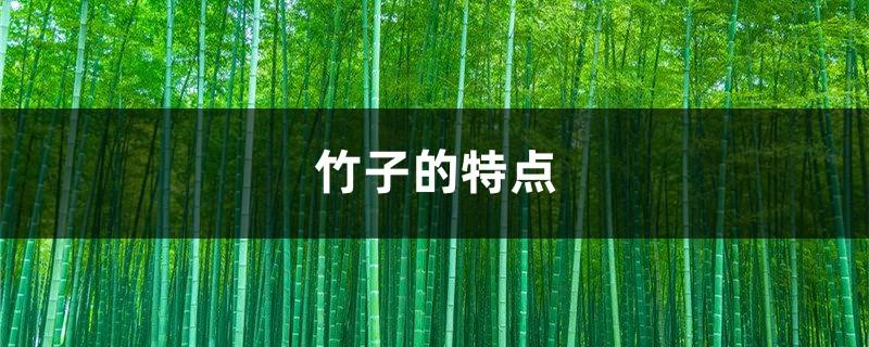 竹子的特点