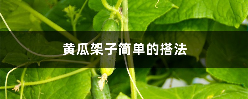黄瓜架子简单的搭法