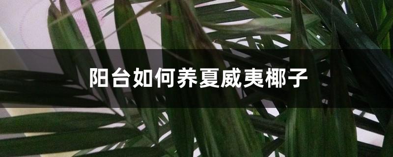 阳台如何养夏威夷椰子,需要注意什么