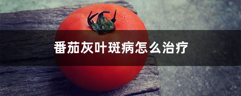 番茄灰叶斑病怎么治疗