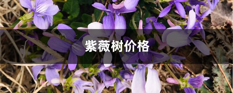 紫薇树价格,紫薇树图片
