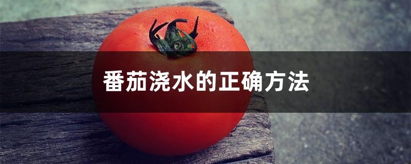 番茄浇水的正确方法,浇水什么时间最好
