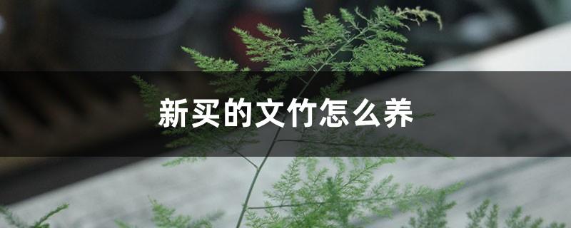 新买的文竹怎么养