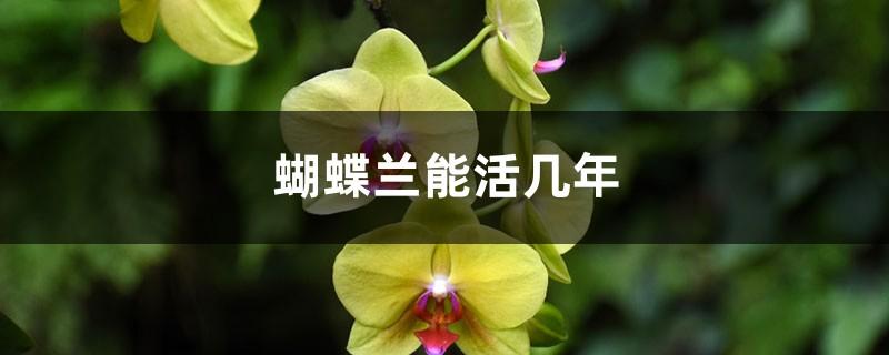 蝴蝶兰能活几年,蝴蝶兰能开几次花