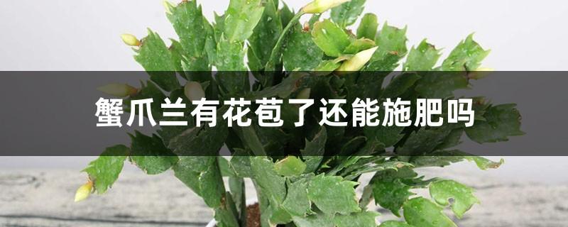 蟹爪兰有花苞了还能施肥吗,开花的时候怎么施肥浇水