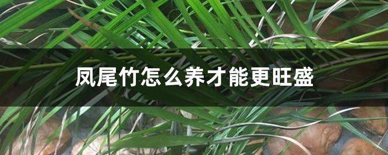 凤尾竹怎么养才能更旺盛