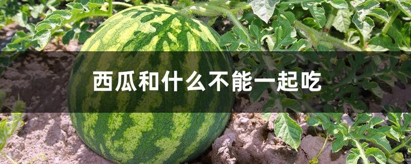 西瓜和什么不能一起吃,西瓜的营养价值