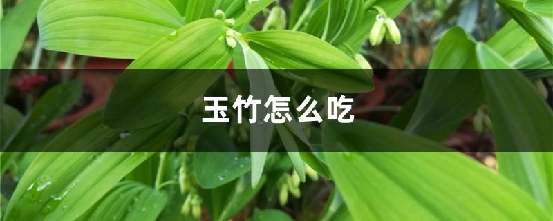 玉竹怎么吃,玉竹的功效