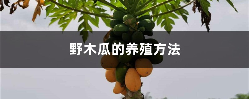 野木瓜的养殖方法
