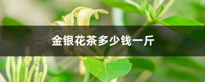 金银花茶多少钱一斤,有什么功效