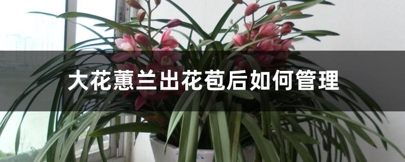 大花蕙兰出花苞后如何管理,有花苞了怎么浇水