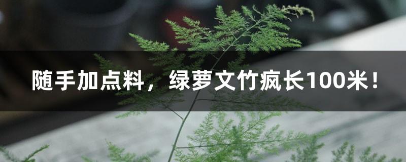 随手加点料,绿萝文竹疯长100米!