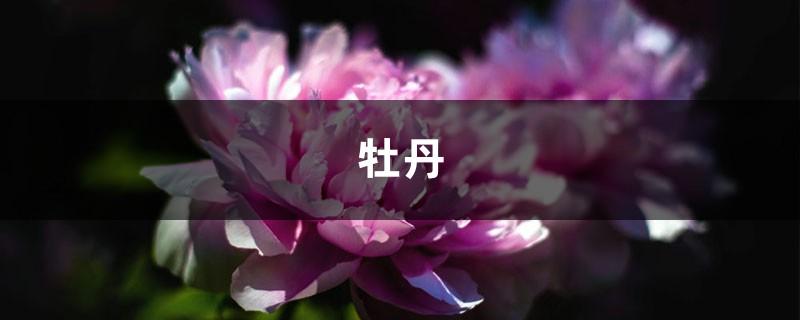 50年的牡丹,110年的仙人掌,这些花岁数竟比你还大!