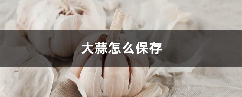 大蒜怎么保存,发了芽的大蒜能吃吗