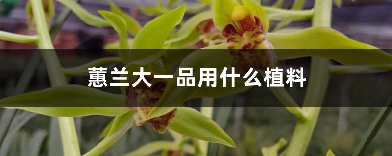 蕙兰大一品用什么植料,容易开花吗,好养吗
