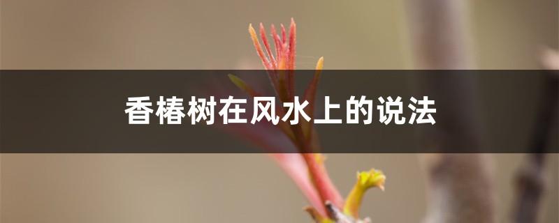 香椿树在风水上的说法,栽在什么位置好