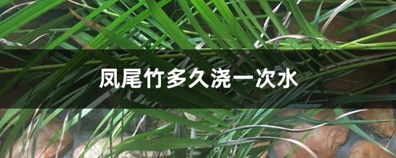 凤尾竹多久浇一次水