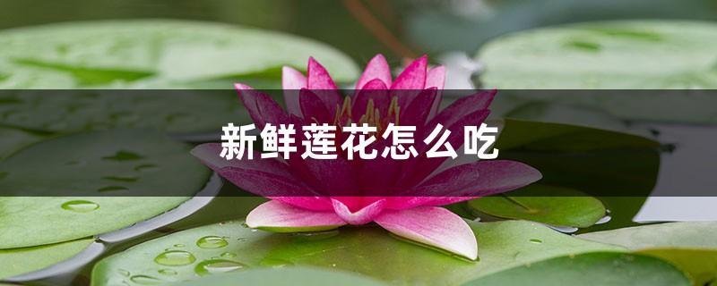 新鲜莲花怎么吃,孕妇能吃吗