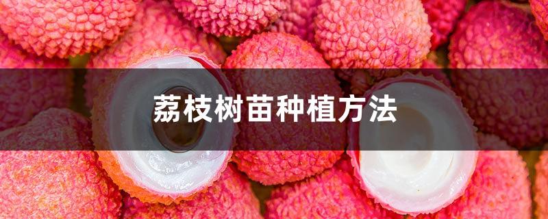 荔枝树苗种植方法,荔枝树图片