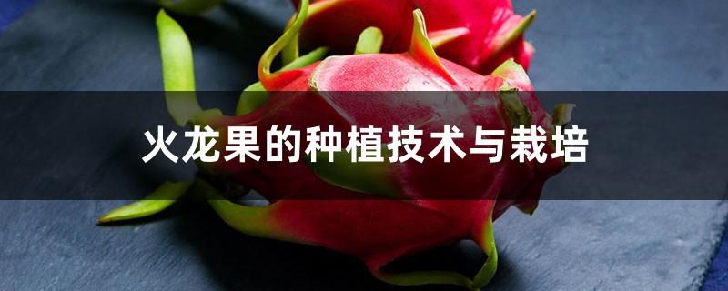 火龙果的种植技术与栽培