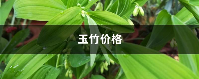 玉竹价格,玉竹图片