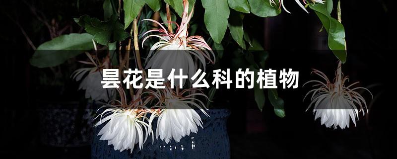 昙花是什么科的植物,是雌雄异株植物吗